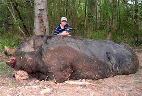 1100 pound Hog is a Hoax