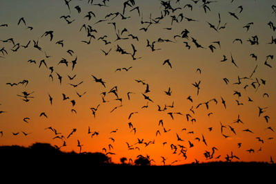 Bats Save Farmers Almost $2M Annually