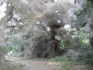 Tawakoni Spider Web