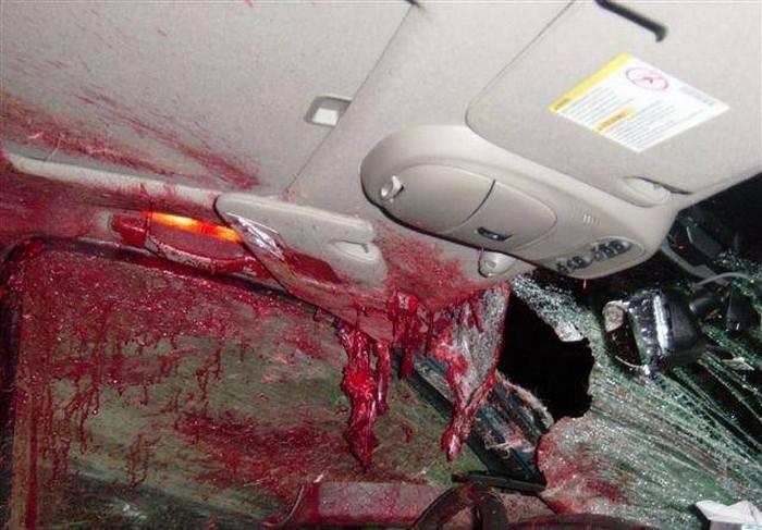Deer road accidents essay